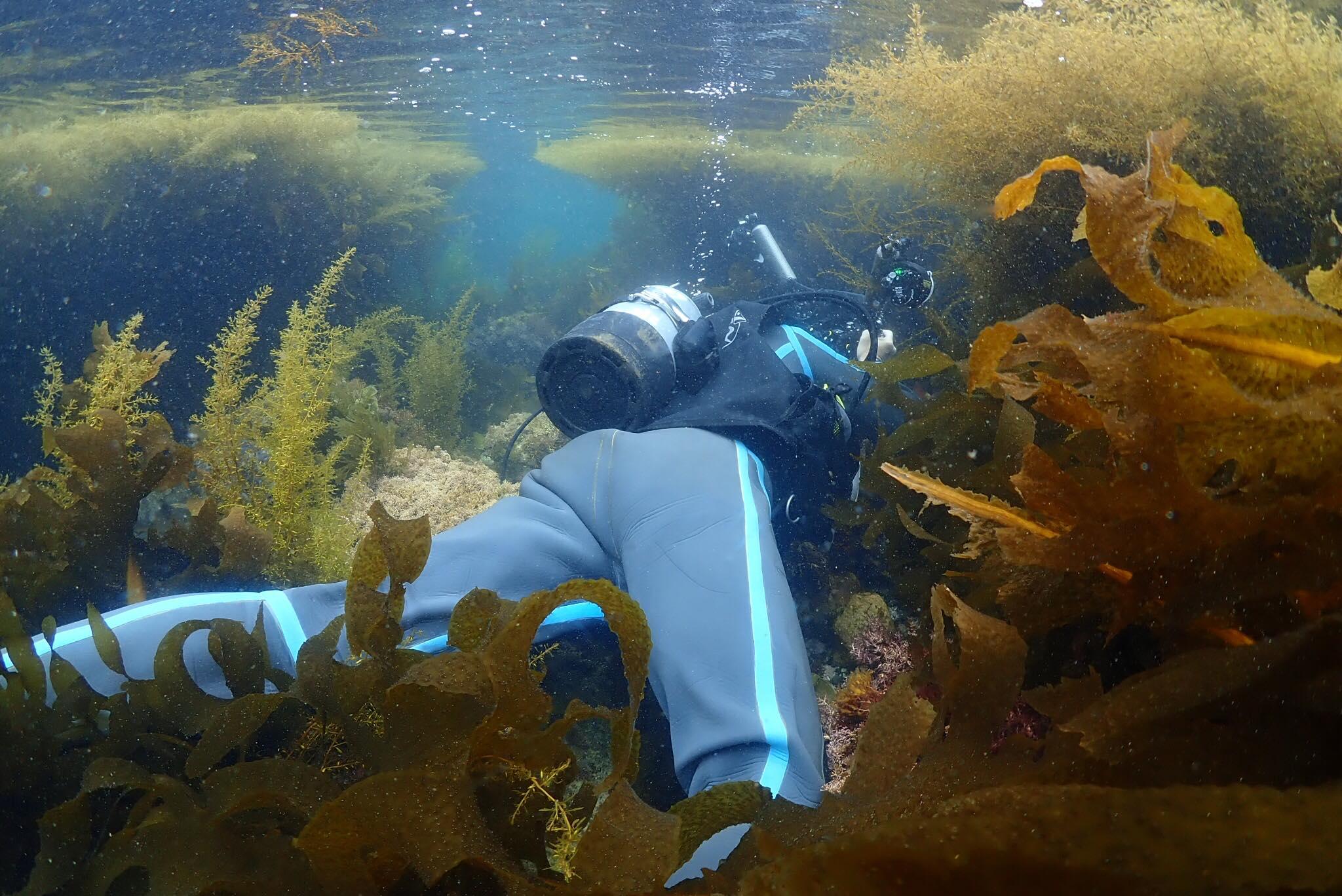 今の葉山、海藻モリモリです!!